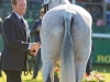 Oliver Townend and Ballaghmor Class, horse inspection © Trevor Holt